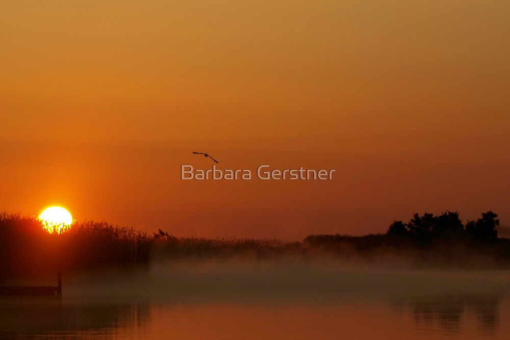 Morning Glorious - As Is by Barbara Gerstner