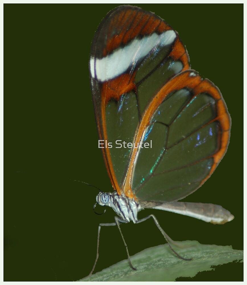 Transparant by Els Steutel