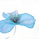 POPPY IS  FEELING BLUE  ( From Painted Flowers collection ) ) by EvaMarIza
