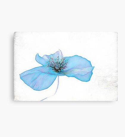 POPPY IS  FEELING BLUE  ( From Painted Flowers collection ) ) Canvas Print