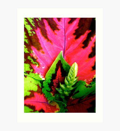 Coleus Plant Art Print