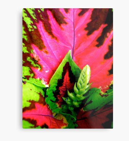 Coleus Plant Metal Print