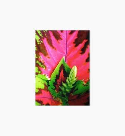 Coleus Plant Art Board