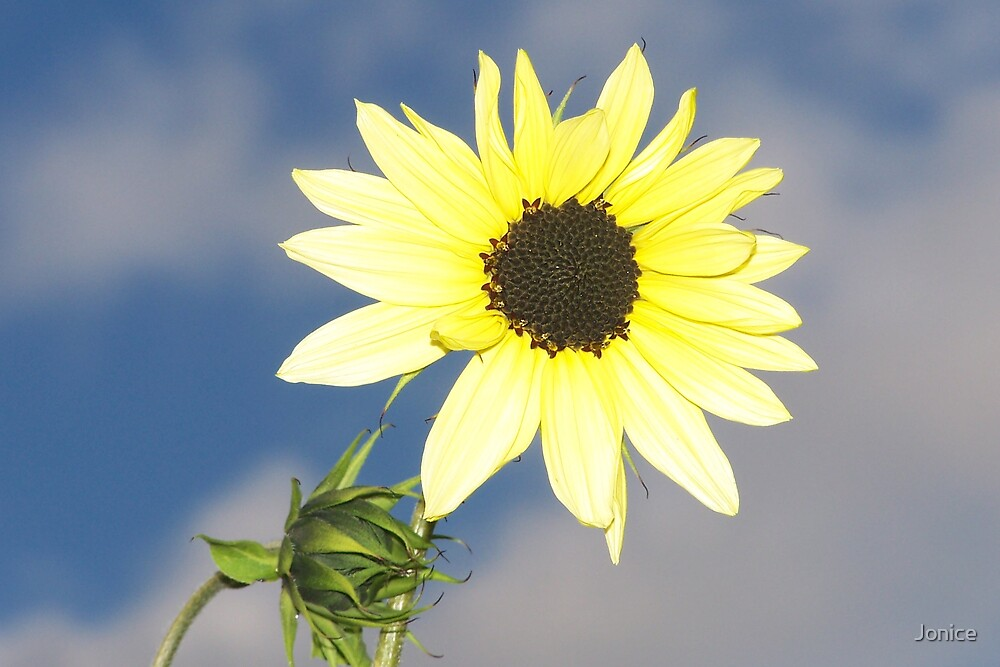 Small Sunflower by Jonice