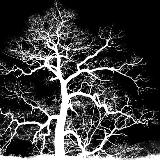 Lightning Tree by Jean Gregory  Evans