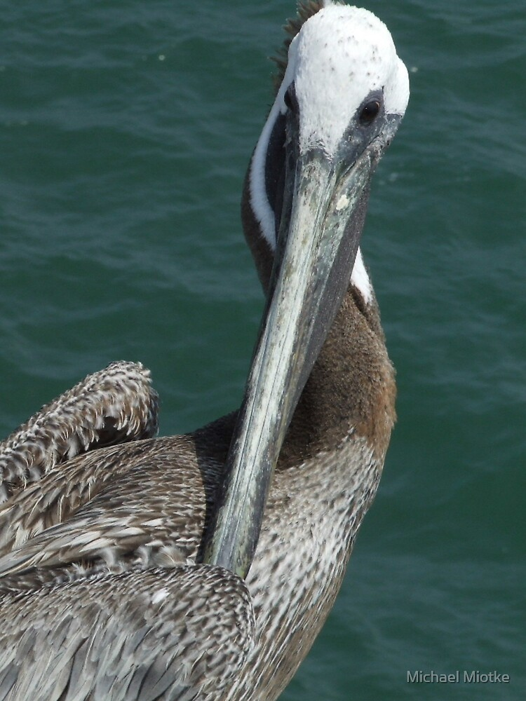 Pelican by Michael Miotke