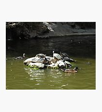 Turtles Photographic Print