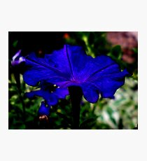 BLUEberry Photographic Print