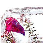 Siamese Fighting Fish Nest by shhevaun