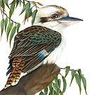 kookaburra by casshanley