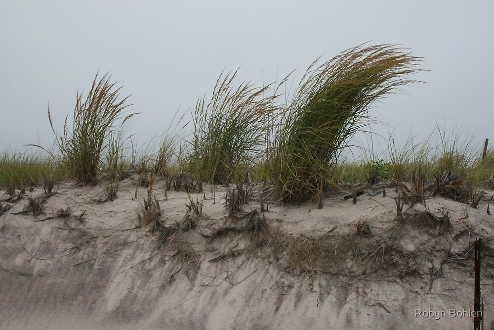 along the dunes by Robyn Bohlen