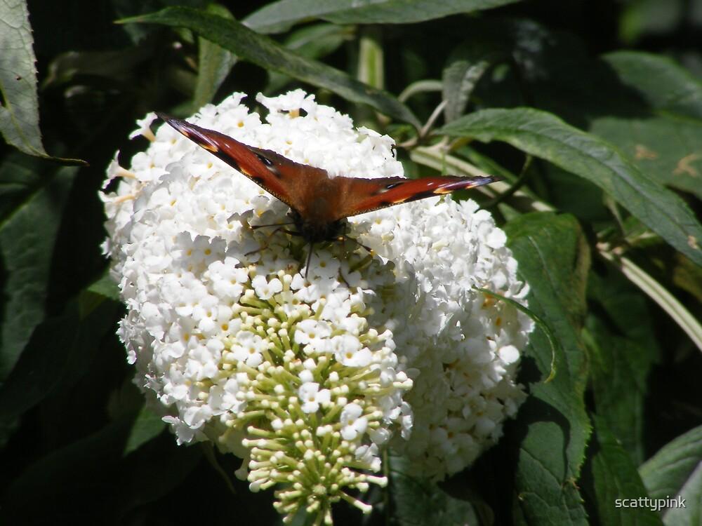 landing flower by scattypink