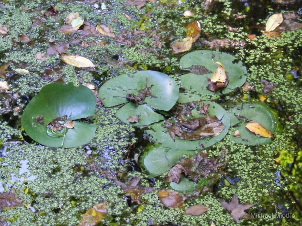 Lily Pads by Michael Miotke