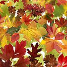 Autumn Fall Leaves by Looly Elzayat