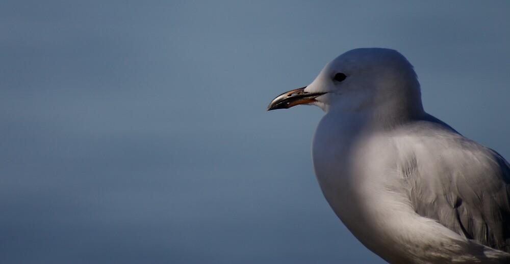Seagull by Casey Moon-Watton