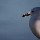 Seagull by Casey Moon-Watton
