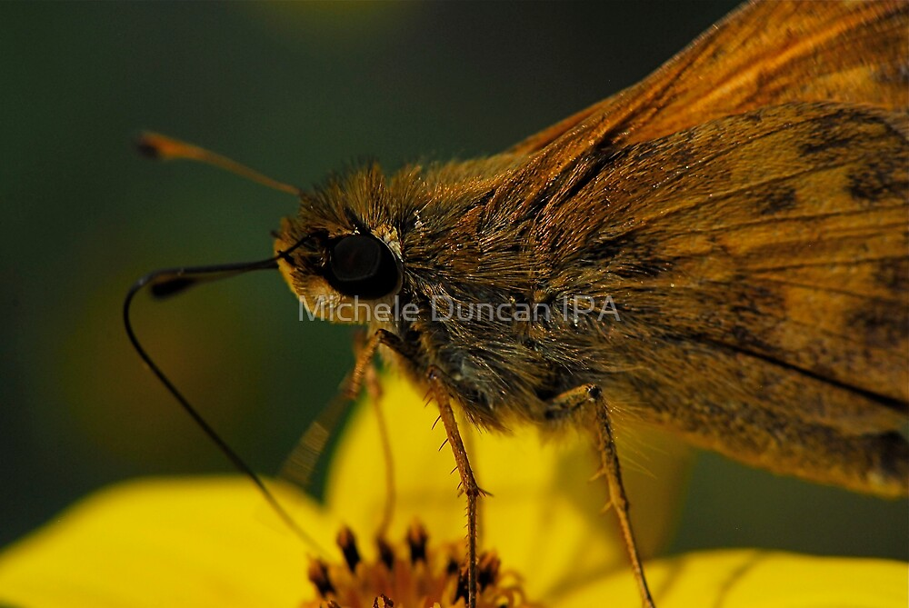 Bug Eye by Michele Duncan IPA