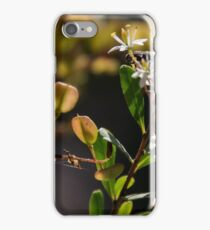Flowers and seed heads white Microphylla clematis bush DCT 20150128 1468  iPhone Case/Skin