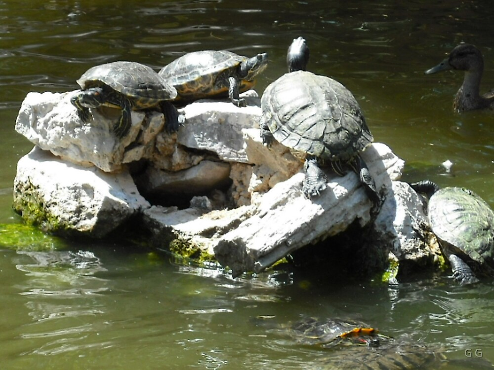 Turtles by G G