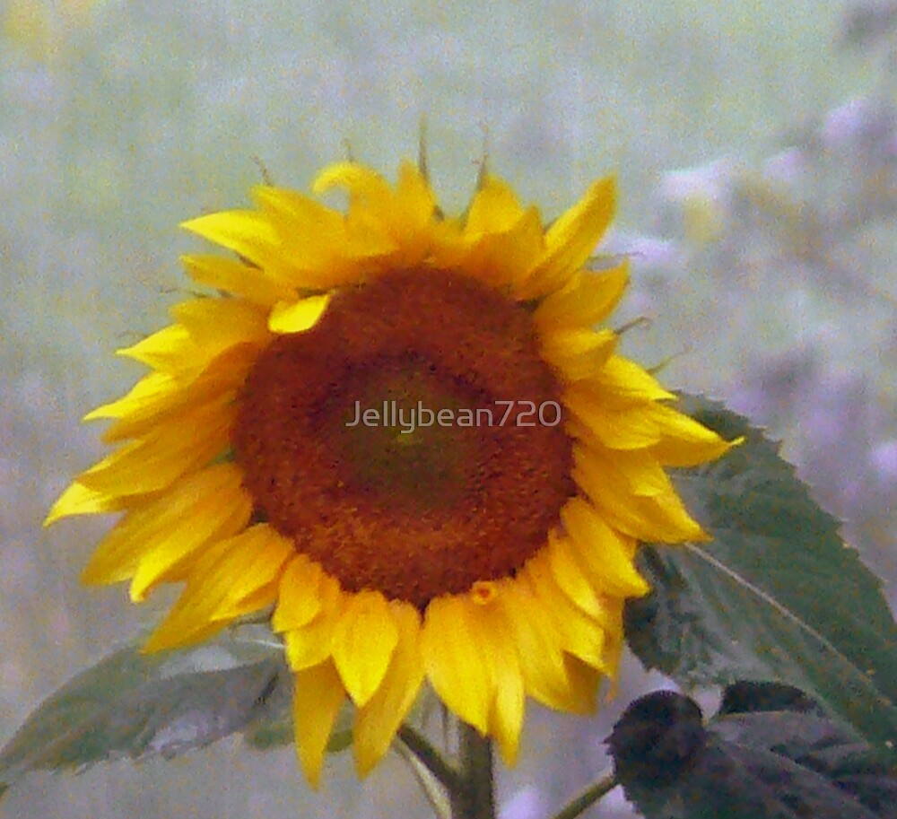 Sunflower  by Jellybean720