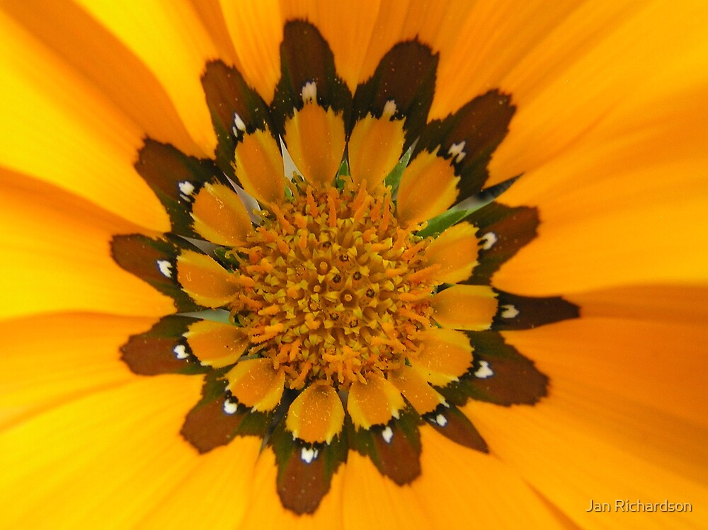 The Heart of a Gazania by Jan Richardson