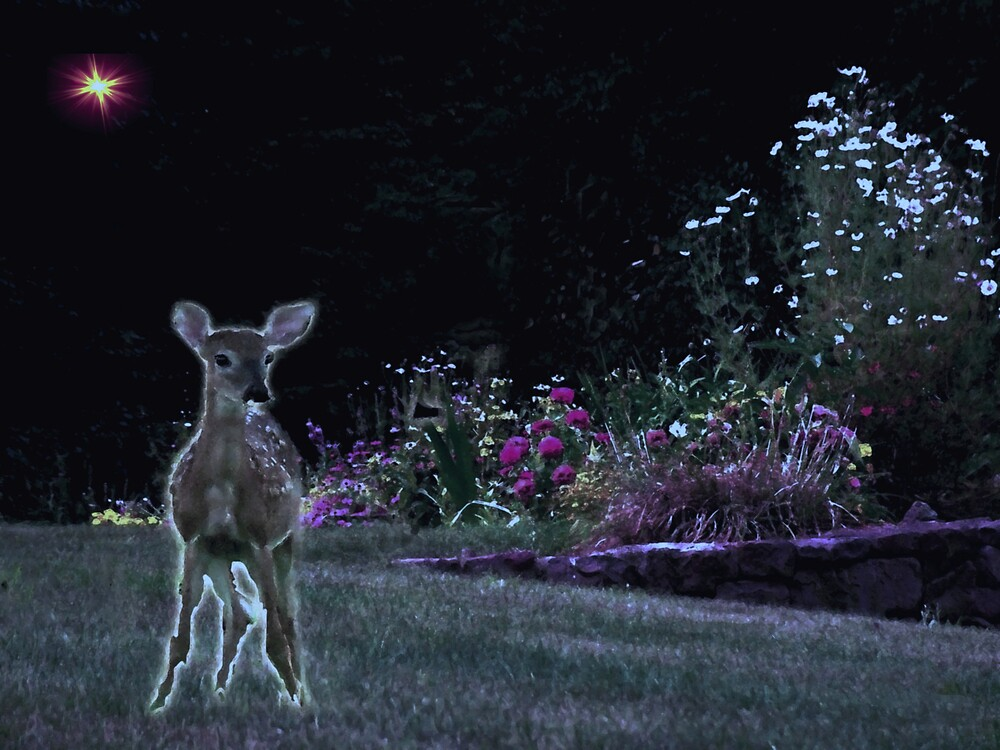 Visit to the Garden at Night by Judi Taylor