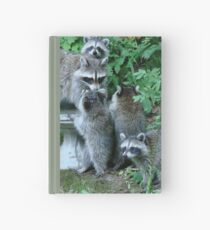 Raccoon Mom with 4 Kits Hardcover Journal
