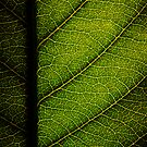Leaf by Ross Jardine