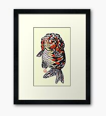 Calico Ranchu Framed Print