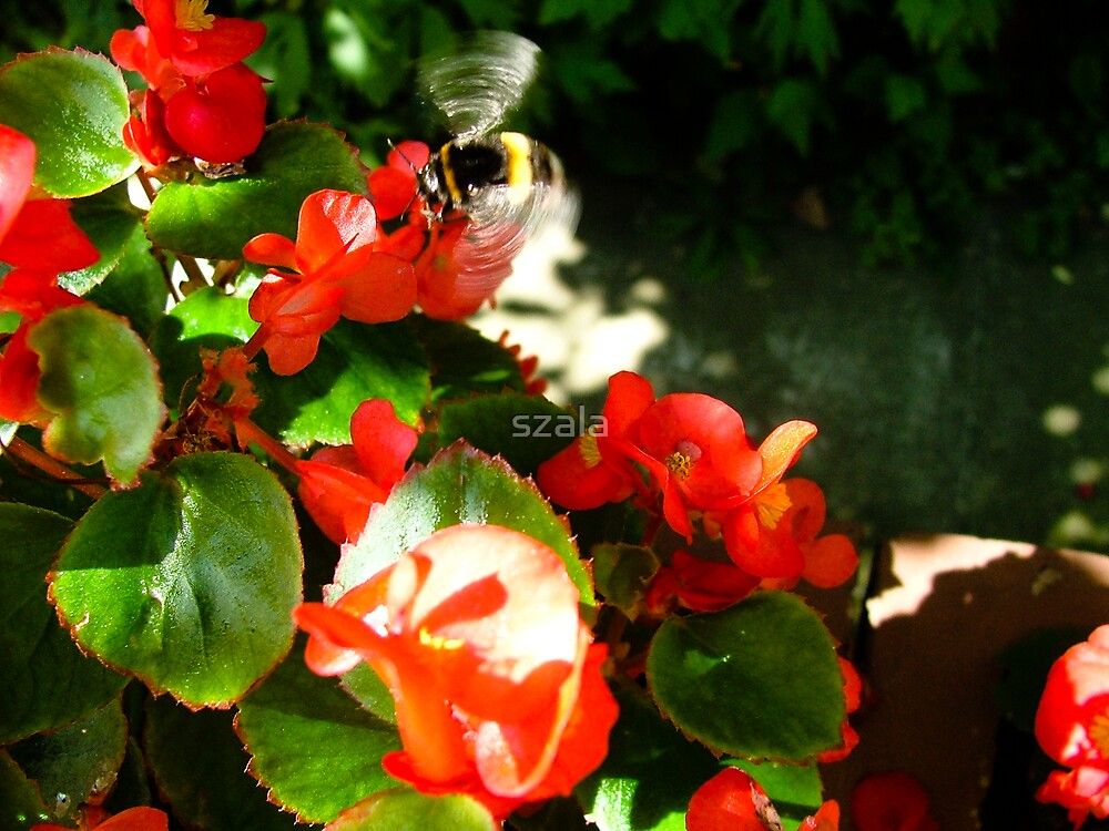 Flower by szala