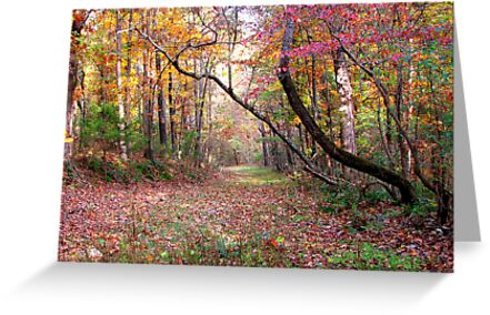 Forest Path,  Arkansas Ozark Mountains by NatureGreeting Cards ©ccwri