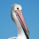 Portrait of a Pelican by JulieM