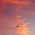 Sunset Flight by LizzieMorrison