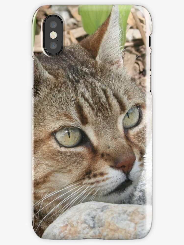 Tabby Cat Portrait by taiche