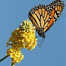 Butterfly by LizzieMorrison
