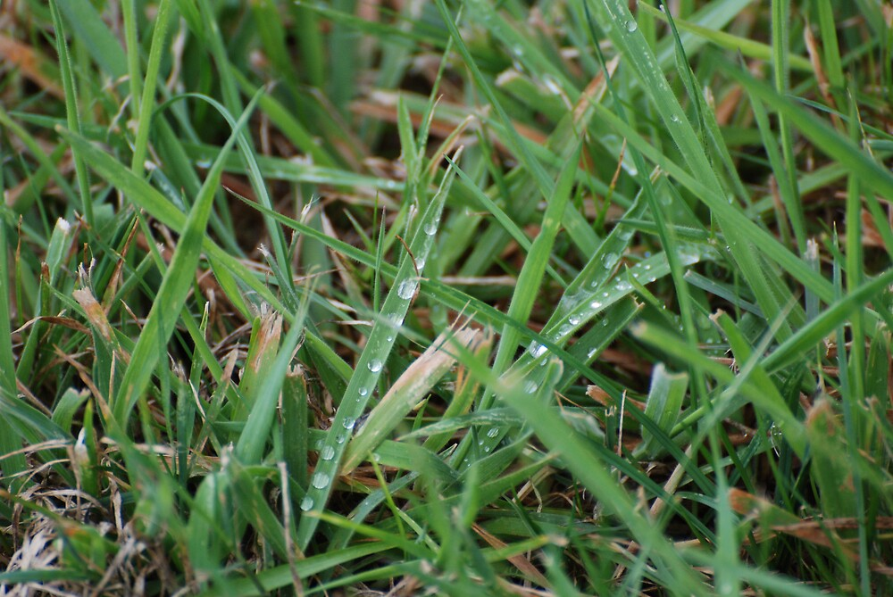 Dew on the grass by walkrz