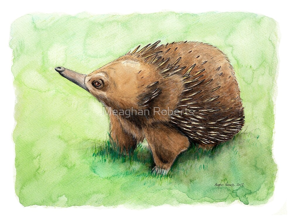Echidna by Meaghan Roberts