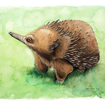 Echidna by MeaghanR
