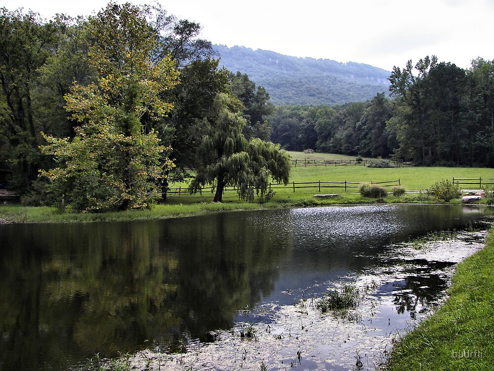 reflecting pond by budrfli