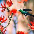 Malachite Sunbird In Flight by WelshPixie