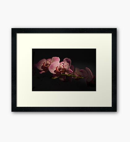 Orchids by Night Framed Print