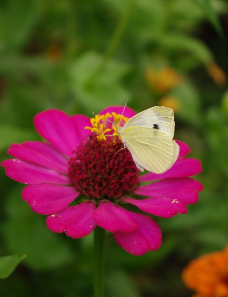 Butterfly by ella30