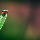 Metallic bug on leaf tip by WelshPixie