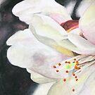 Suginami Sakura 3 by samanthajhorne