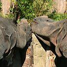 Rhino sweethearts by ljm000
