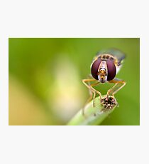 Hoverfly Photographic Print
