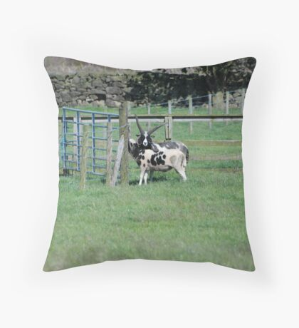Shoat? Spotted Sheep? Throw Pillow