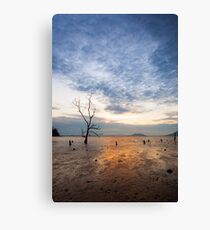 Lonely tree at muddy beach at sunset Canvas Print
