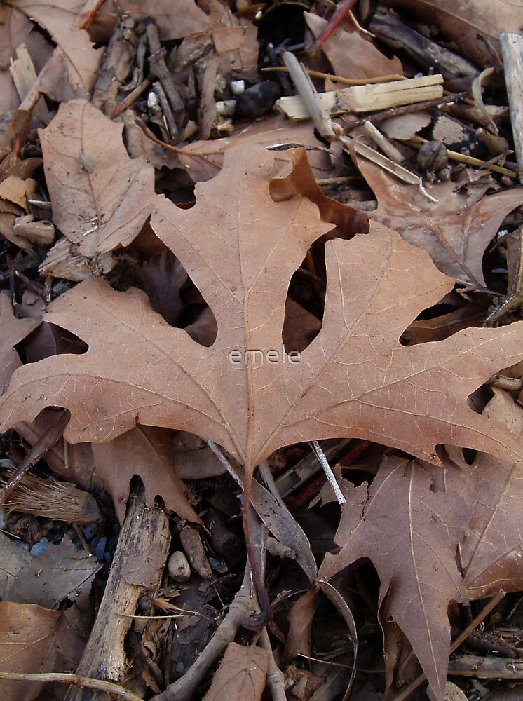 Fall / Autumn Leaf Card by emele