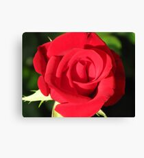 Single Red Rose #1 Canvas Print